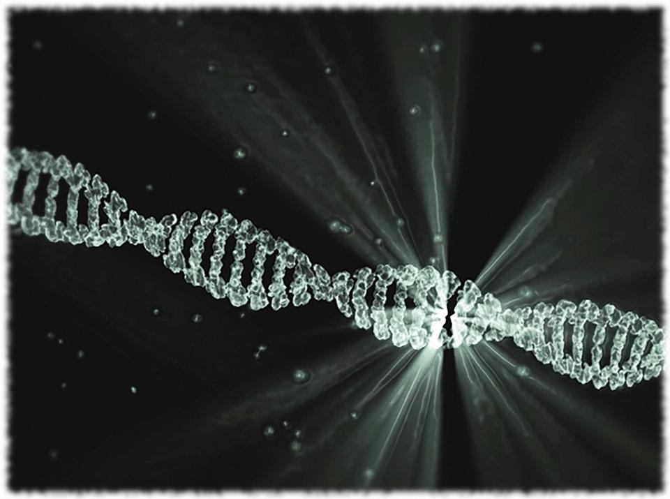 L'homme a 23 paires de chromosomes… et est cité 23 fois dans le Coran