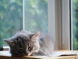 Les effets négatifs du manque de sommeil (prouvés par la science)